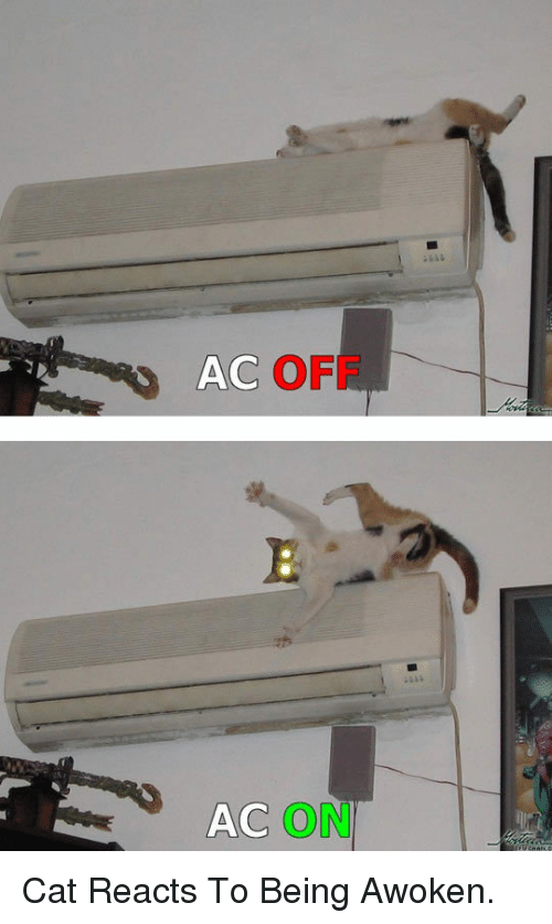 Cat, Off, and Awoken: AC OFF  AC ON <p>Cat Reacts To Being Awoken.</p>